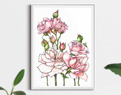 Pink roses flowers illustration wall art print poster