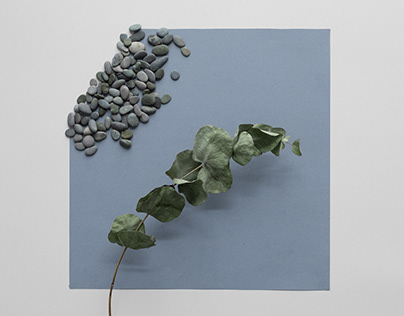 Plant and Stone   Stop-motion Animation