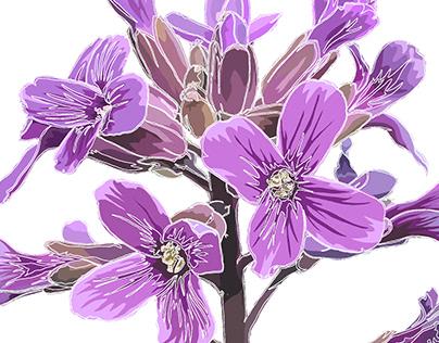 Wildflowers of Sierra Nevada: The Pinyon Rockcress
