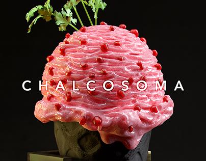 Chalcosoma