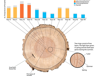Infographic: Tree rings convey past weather patterns