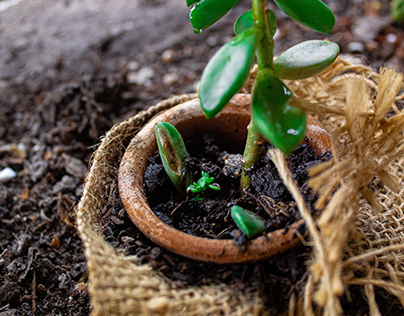 Plantgrowpick | Successful Gardening Tips for Beginners
