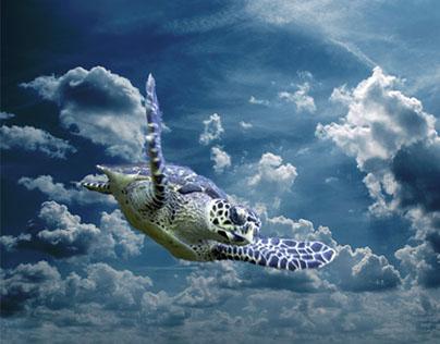 Turtle's adventures