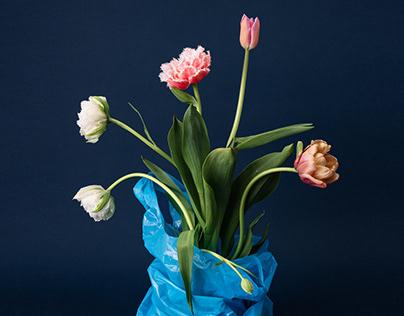 Flowers // 2019 - 2020