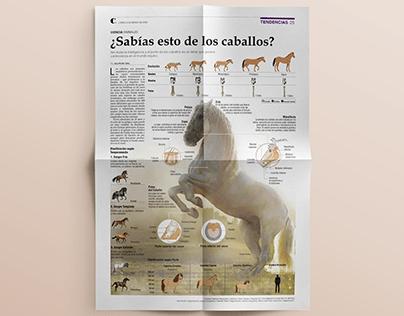 Infografía - Los Caballos