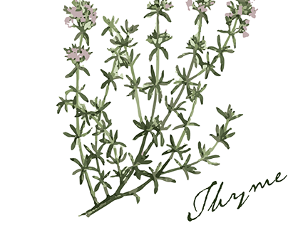 Watercolor Vectors - Herbs
