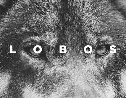 Anchieta - Lobos