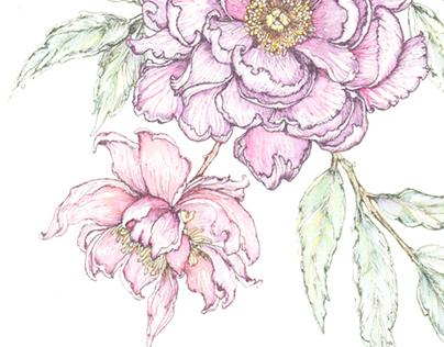 Illustration commission for Forevermark
