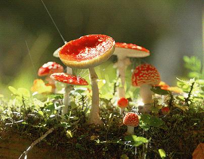 FOREST | CGI