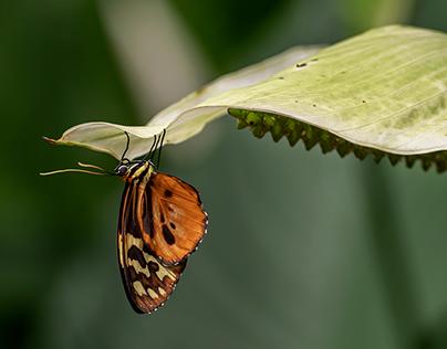 alla casa delle farfalle II