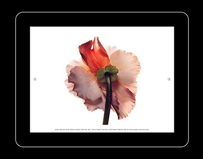 Edouard Malingue Gallery - Website Design & Development