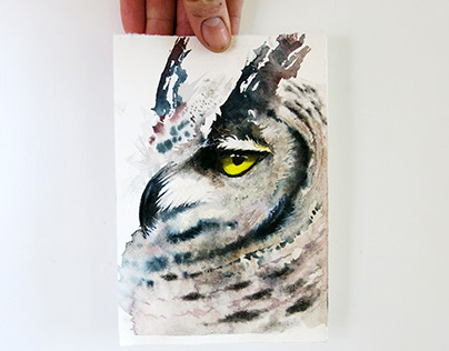 Determined owl