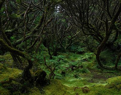 Floresta de Nuvens, Terceira, Açores_Misterios Negros