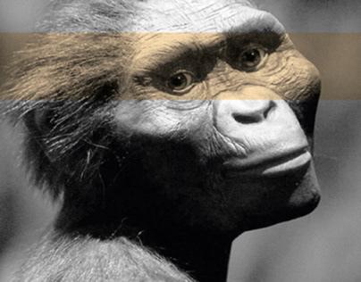 Mostra Museale sull'evoluzione umana
