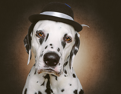 Dogs with hat