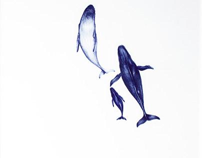 Migratum Azul