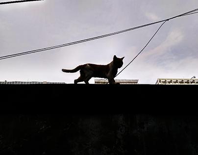 tough cat