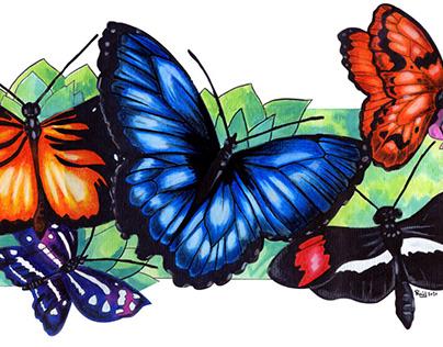 Mariposas Costa Rica