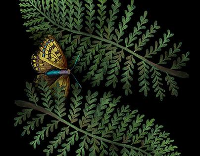 Ferns and Moths art print