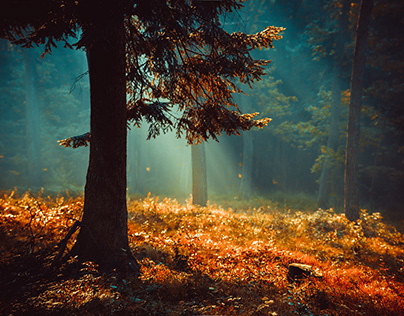 The rays of the sun in the forest