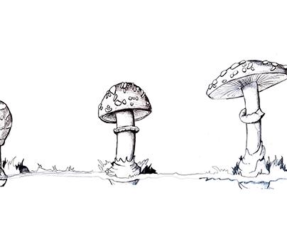 DVB102 Mushroom Ageing Drawings