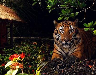 Sundarban National Park Tourism