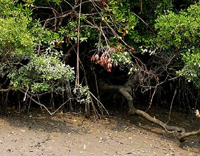 SUNDARBANS: The mysterious mangroves!