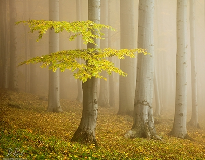 The beauty of the forest...