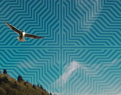 #191 Birds Eye View