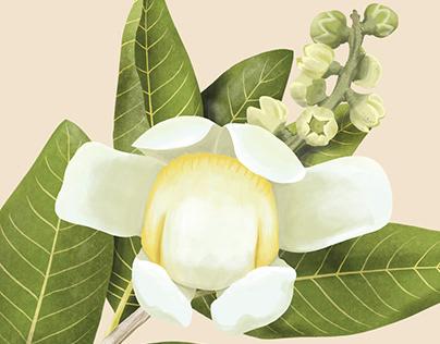 100 plantas del caribe colombiano