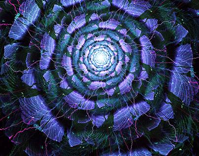 Flowers & Organic Design