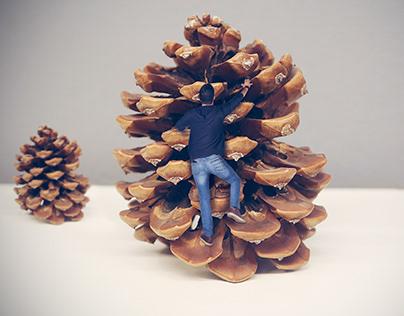 Pine cone climbing photo manipulation.