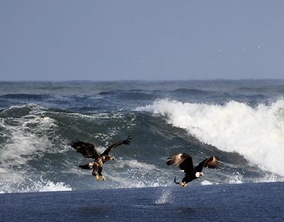 Eagles At The Beach