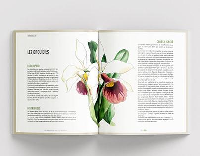 La nostra història amb les orquídies