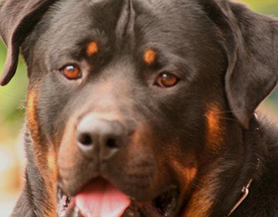 Doggie Dog World