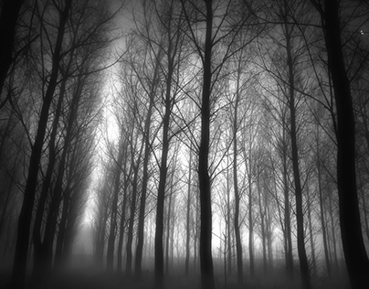 Trees in mist collection