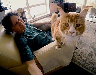 The Secret Lives of New York Cats (short film)