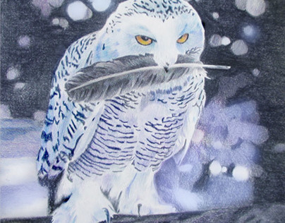 Owl Color Pencil Drawing by K. Fairbanks