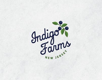 Blueberry Farm Branding