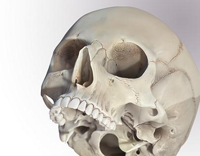 Cribra Obitalia, Medical illustration