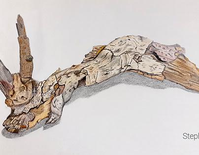 Old nut branch