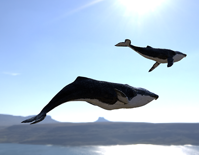 Whales in the sky over South Africa