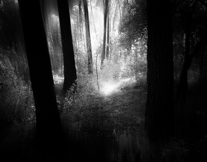 INSIDE THE FOREST