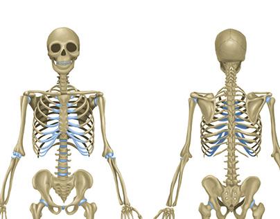 Ilustração Médica para máquina de radiografia