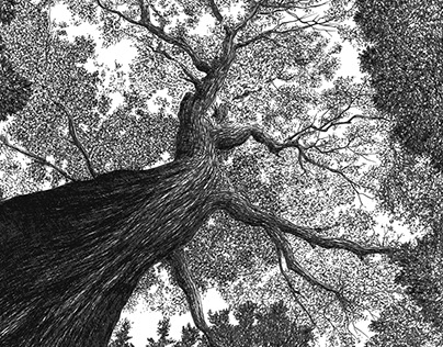 vertigo of the forest
