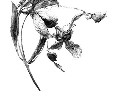 Herbier Fané