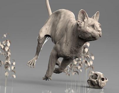 Sculpting Anatomy // Domestic Cat
