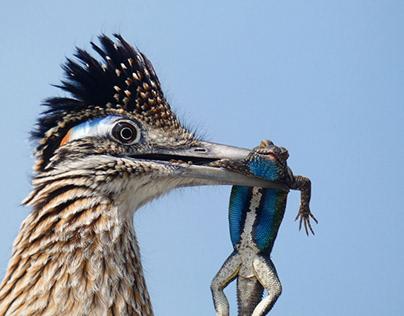 Award Winning Wildlife Photography