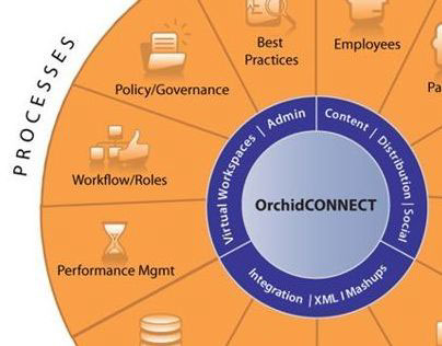 Orchid Business Development Strategy