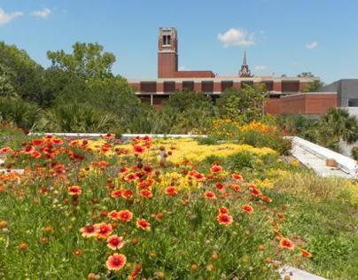 University of Florida Green Roof